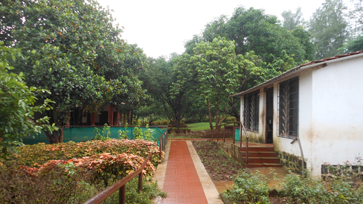Vegetable Patch At Umang